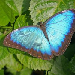 mooi metallic blauw