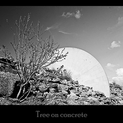 Boom op beton