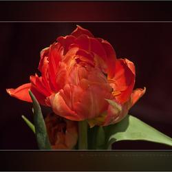 """Sunshine"" on my petals"