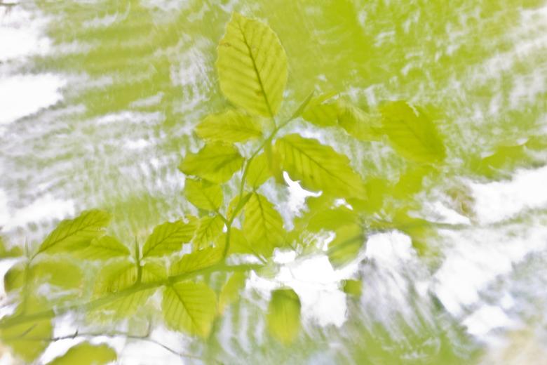 Green Feelings - Beukenblad - sfeerimpressie<br /> Eentje in mijn serie fresh green, ondanks dat deze in de Herfst genomen is waren de blaadjes nog f
