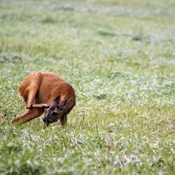 Ook dieren in het wild plagen elkaar wel eens.