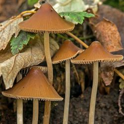 nog wat paddenstoeltjes.
