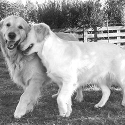 Sammy en Luna. Echte dierenliefde