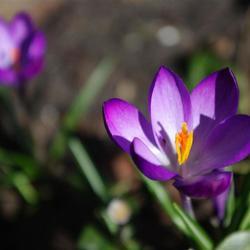 Ha fijn, lente!