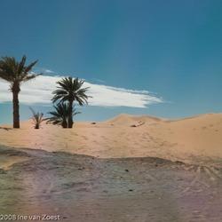 Palmen in de woestijn