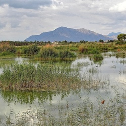 Natuurpark El Hondo.
