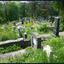 begroeide begraafplaats 1605096115mqw