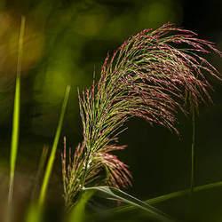 quite some grass