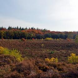 Hattem Autumn