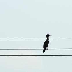 Met de muziek mee