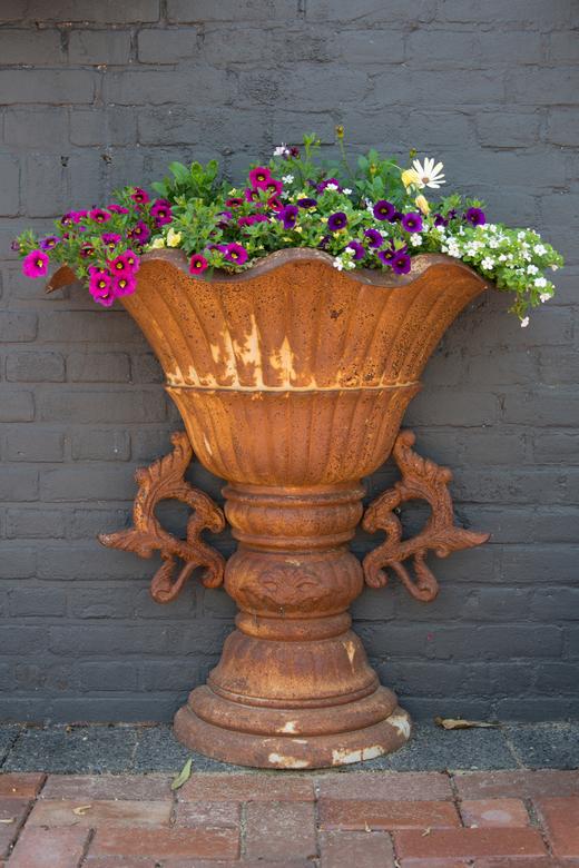 Rusty Vase.jpg - Roestige vaas gevuld met bloem tegen een grijze achtergrond