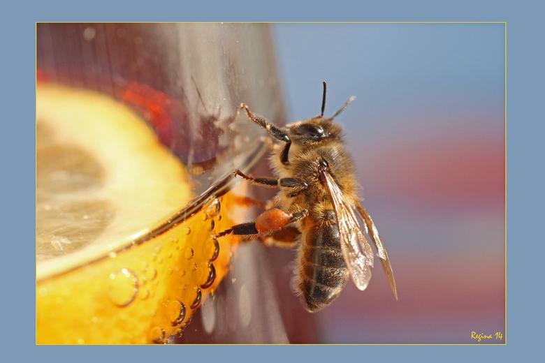 zomer - Terug uit Spanje.<br /> Zin in beter weer.<br /> Bij op glas cola met citroen<br /> Foto gemaakt door Regina<br /> <br /> gr Edwin en Reg
