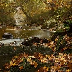 Ardennen in de herfst