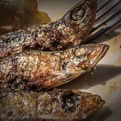 sardinas @ roquetas
