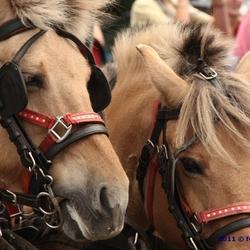 Paarden in Andalucië
