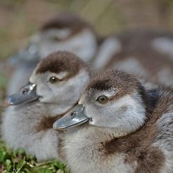 De familie Pluis in het gras.