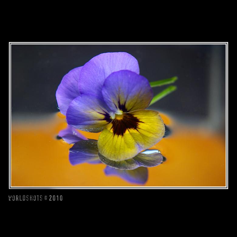 eerste viool - Onbewerkte macro foto van een viooltje met spiegel en water