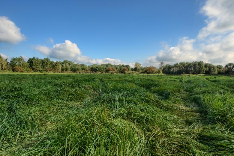 grasduinen - OP zoek naar  boomkikkertjes. vorig jaar sept...die we verderop ook hadden gevonden...deze staan al ergens op deze site.