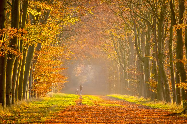 De kleurentunnel - Een fotograaf die een fotograaf op de foto zet. Deze brede laan met hoge bomen is de mooiste in mijn buurt. Erg lang ook. Hij begin