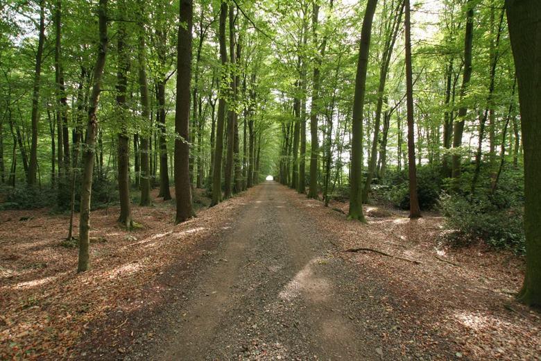 Eindeloos - Tijdens een fietstocht door een bos,viel me op dat het leek een eindeloos bospad te zijn.Kreeg het eindpnt na wat proberen wel precies in