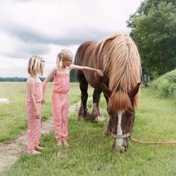 Meisjes met paard en hond