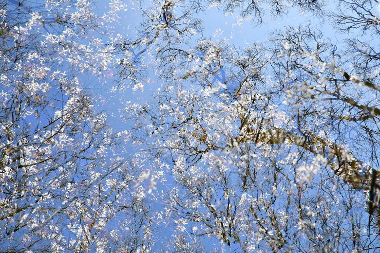 Voorjaar - Dubbele belichting