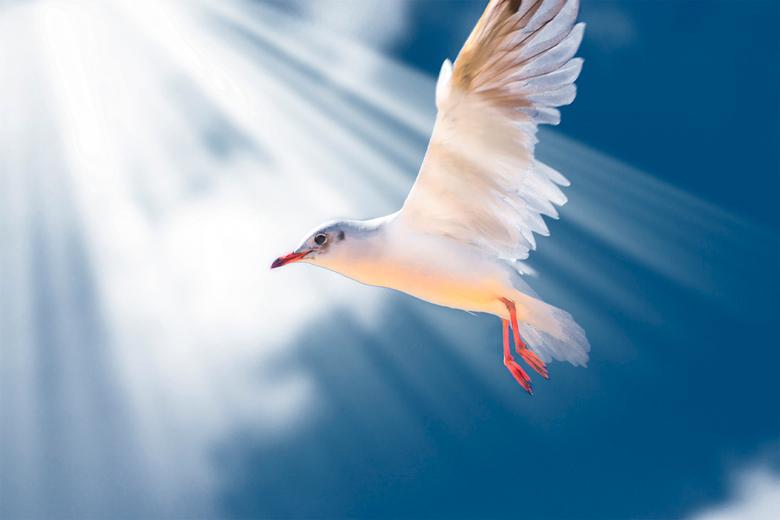 bird in the sky - meeuw boven Ijsselmeer afgelopen zomer