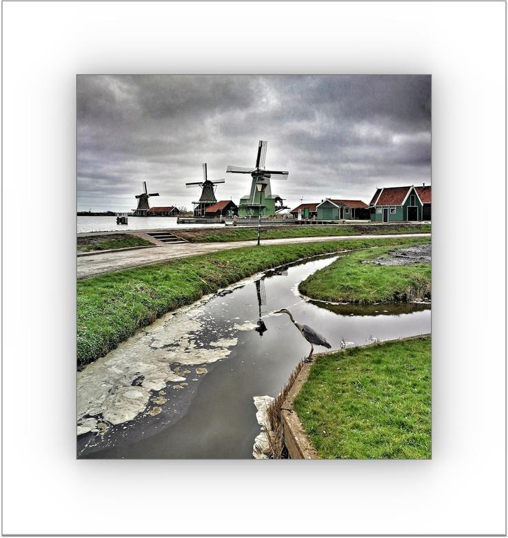 Donkere wolken . .  - ZAANSTAD -  . . . boven de Zaanse Schans . . .geen mens te bekennen . . alleen de reiger en de fotograaf . . .<br /> wat een he