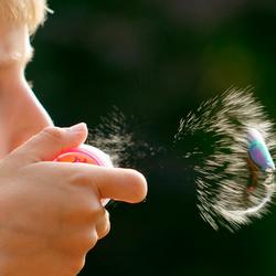 Het korte leven van de zeepbel II