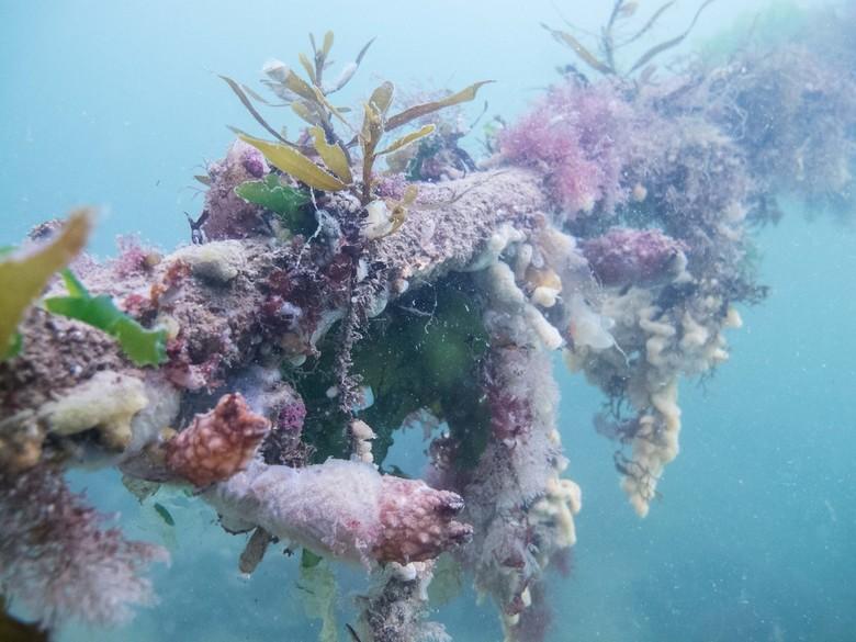 Onderwatertuintje