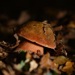Verscholen onder een bladerdek