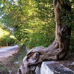 Nature @ rest