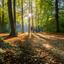 Prachtig tegenlicht in het bos
