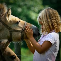 Paardenmeisje 2