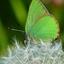 Zó groen