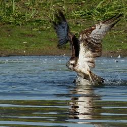 catching fish 2