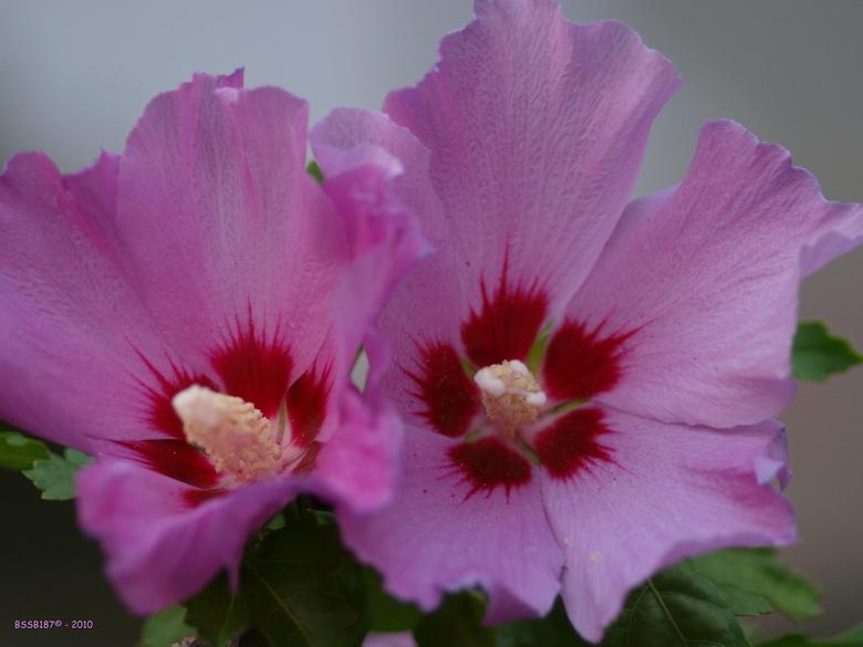 Colors of nature (1) - Vrijdag middag nog maar eens naar de Botanische tuin geweest. Dit maal echter met m'n nieuwe Sigma 105mm F2.8 DG Macro len