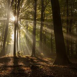 stralen in het bos