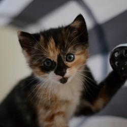 Kitten Lexie