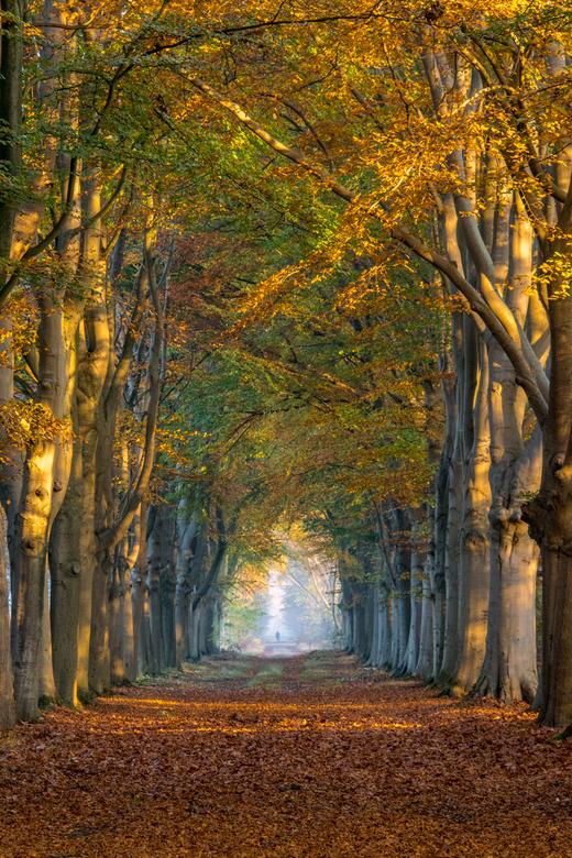 Laan met herfstkleuren -