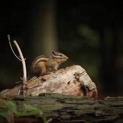 Eekhoorn Warande