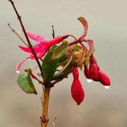 Plant or flower._01