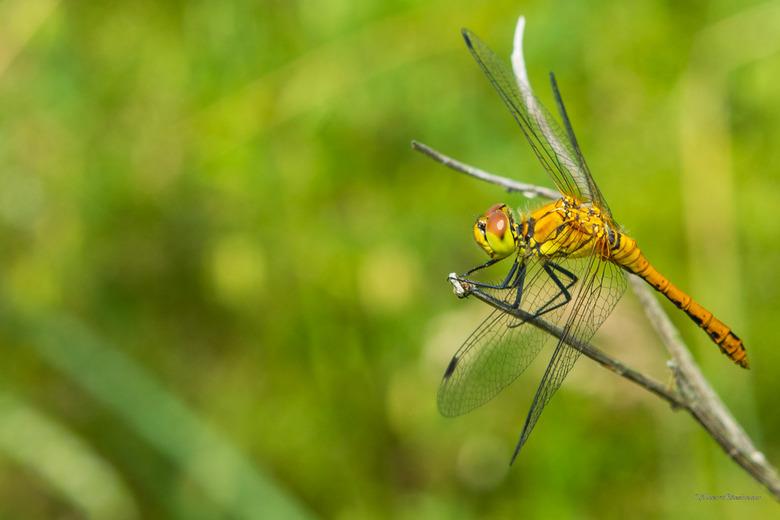 libelle - macro opnamen