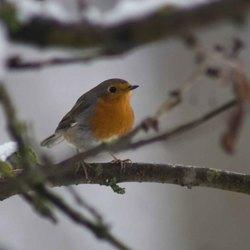 vogels in de tuin 8