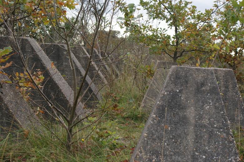 anti-tank wall - Hier een stukje van de anti-tank wall in het panbos.<br /> <br /> Op of aanmerkingen zijn welkom