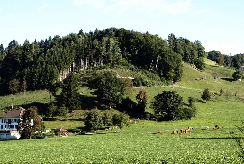 alpenweide - tijdens onze rit in Zwitserland even uit de auto gestapt, om dit natuurschoon mee te nemen.<br /> het is daar prachtig.<br /> <br />