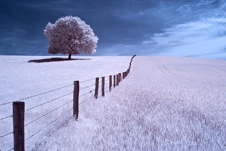 Surrealistisch landschap - Infrarood opname gemaakt met omgebouwde Canon 20D speciaal voor infrarood fotografie.