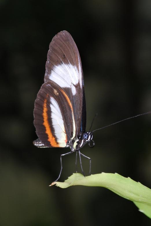 Macro - Vlinder in Blijdorp