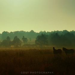Horses in the early morning.