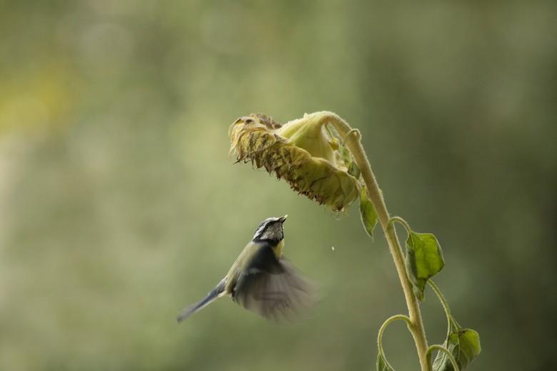 pootjes - de titel ..pootjes...wel...wilde deze foto eerst wegdoen..toch wel weinig scherpte maar toen zag ik die pootjes door de vleugeltjes heen ..e